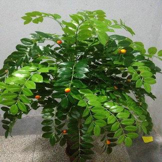 客厅绿植物盆景商场仿真平安树